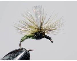 Parachute olive