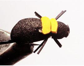 Майский жук Black