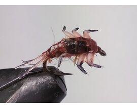 Личинка поденки коричневая