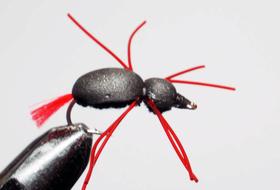 мушка жук Beetle legs1