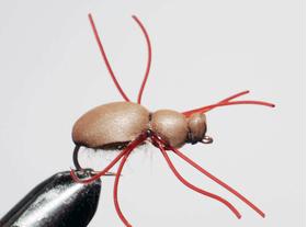 мушка жук Beetle brown legs