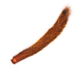 Хвост белки оранжевый