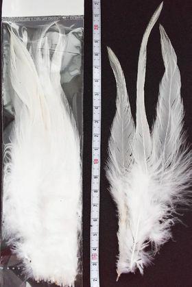 Перья петуха белые
